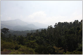 Western Ghats view from our resort in Wayanad
