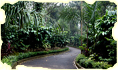 Coffee plantation around Little Home Resort in Wayanad
